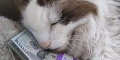 Kissat rakastavat rahaa – kuvat todistavat