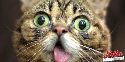 Kieltään näyttävät kissat! – Oletko nähnyt hassumpaa!