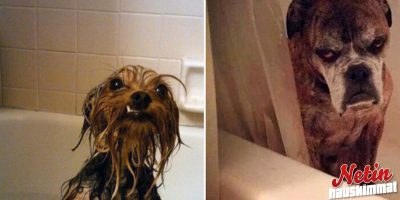 Koirat rakastavat kylpemistä! – Vai rakastavatko?