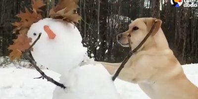 Koira vihaa lumiukkoja – hulvaton video!