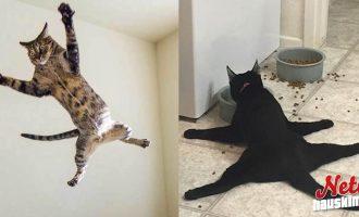Kaikki kissat ovat erilaisia! – Tekeekö sinun kissasi näin?