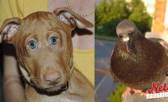 Jos eläimillä olisi silmät samassa kohtaa kuin ihmisillä – Tältä ne näyttäisivät!