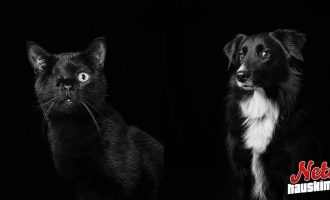 Nämä eläimet kaipaavat kotia! – Toivottavasti nämä kuvat auttavat etsinnöissä