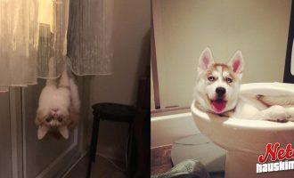 Lemmikit osaavat yllättää – Näyttääkö teillä tältä?