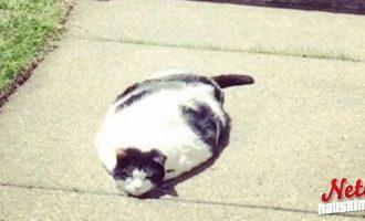 Kissatkin sulavat! – Aiheuttaako tämän ilmaston lämpeneminen?