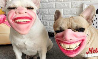 Omituinen kuonokoppa koiralle! – Näyttää puoliksi ihmiseltä!