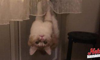 Lemmikeiltä voi odottaa mitä tahansa! – Katso yllättävä kuvasarja!