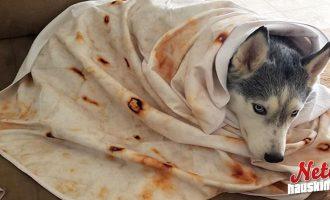 Burrito-viltti on uusin villitys! – Instagramissa jo tuhansia kuvia!