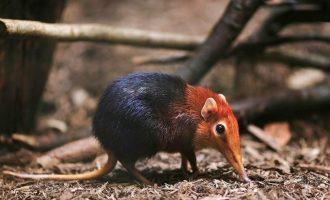 8 toinen toistaan erikoisempaa eläintä maailmalta – kehtaatko olla pitämättä suloisina?
