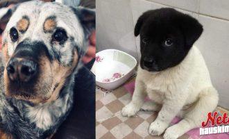 Harvinainen ulkonäkö – Nämä koirat ihastuttavat!
