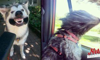 Koirat vs tuuli – Kumpi voittaa?