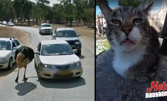 Google street viewin otoksia – Uteliaat eläimet!