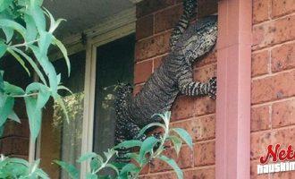 Hyi että! – Tiesitkö että näihin voit törmätä Australiassa!