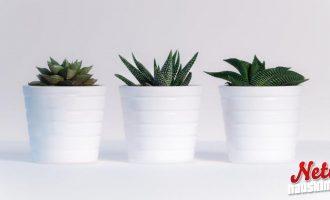 Kertoisipa kasvi paljonko vettä ja valoa se tarvitsee – Nyt se on mahdollista!