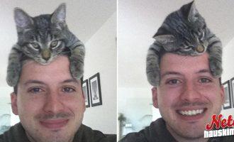 Hullu sometrendi jälleen! – Kissat hattuina!