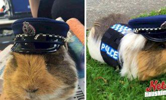 Poliisilla on ihastuttava maskotti! – Sen intohimo on liikenneturvallisuus!
