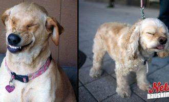 Näytätkö aivastaessasi kauhealta? – Nämä koirat ovat aivan eri maata!