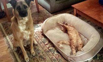 Kissat omistavat koiria 8 kertaa – käykö edes sääliksi?