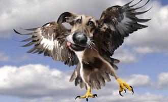 Ai nerokasta vai? – Joku keksi yhdistää linnut ja koirat