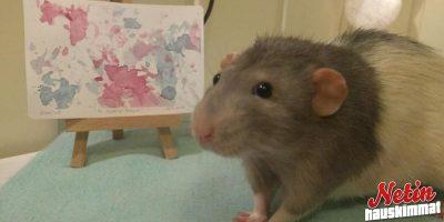Upeaa taidetta! – Tämä rotta osaa maalata!