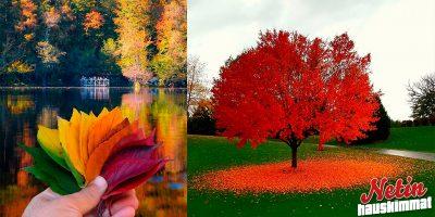 Miltä syksy näyttää ympäri maailmaa? – Katso 10 kaunista kuvaa!