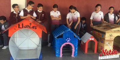 Koululaiset auttoivat kulkukoiria – Rakensivat niille suojia!