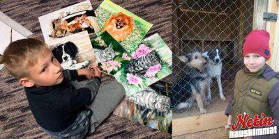 Poika tekee maalauksia löytöeläinkodin eläimistä – Vaihtaa teokset eläinten ruokaan ja tarvikkeisiin!
