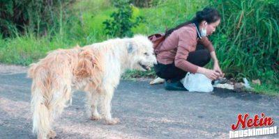 Koira odotti 4 vuotta samassa kohtaa – Lopulta omistajat löysivät sen!