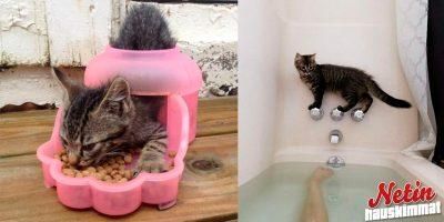 Suloiset, mutta hömpät kissat – Päättivät käyttää kaikki 9 elämäänsä!