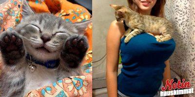 Mitä mieltä olet kissoista? – Nämä yksilöt ovat aika vekkuleita!