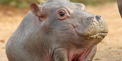 Mitä, jos seuraavilla eläimillä ei olisikaan niskaa? – Kuvanmuokkaus antaa vastauksen