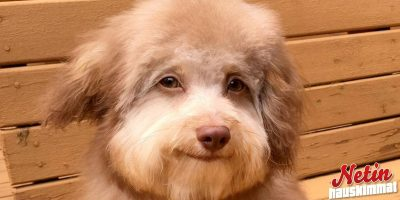 Ihmiskasvoinen koira! – Eikä ole photoshopattu!