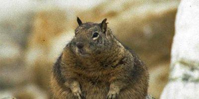 Oletko varautunut jo talveen? – Nämä 8 oravaa eivät taida enää pysyä puussa