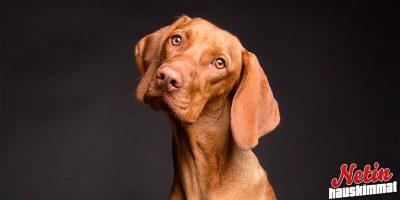 """Omistaja opetti koiran """"puhumaan""""! – Katso video!"""