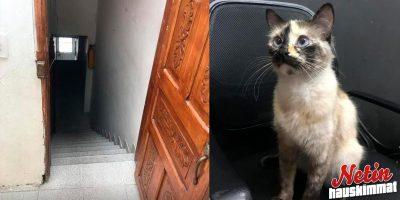 Taapero meinasi pudota rappuset alas – Kissa pelasti viime hetkellä!