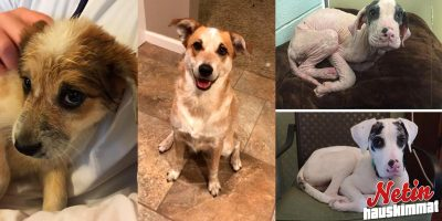 Koirat ennen ja jälkeen adoption – Kuin uusia koiria!