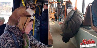 Mitä kaikkea bussissa voi nähdä? – Katso hämmentävät kuvat!
