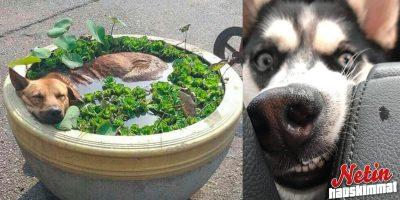 Onko koirasi rikki – Vai mitä ihmettä se tekee?